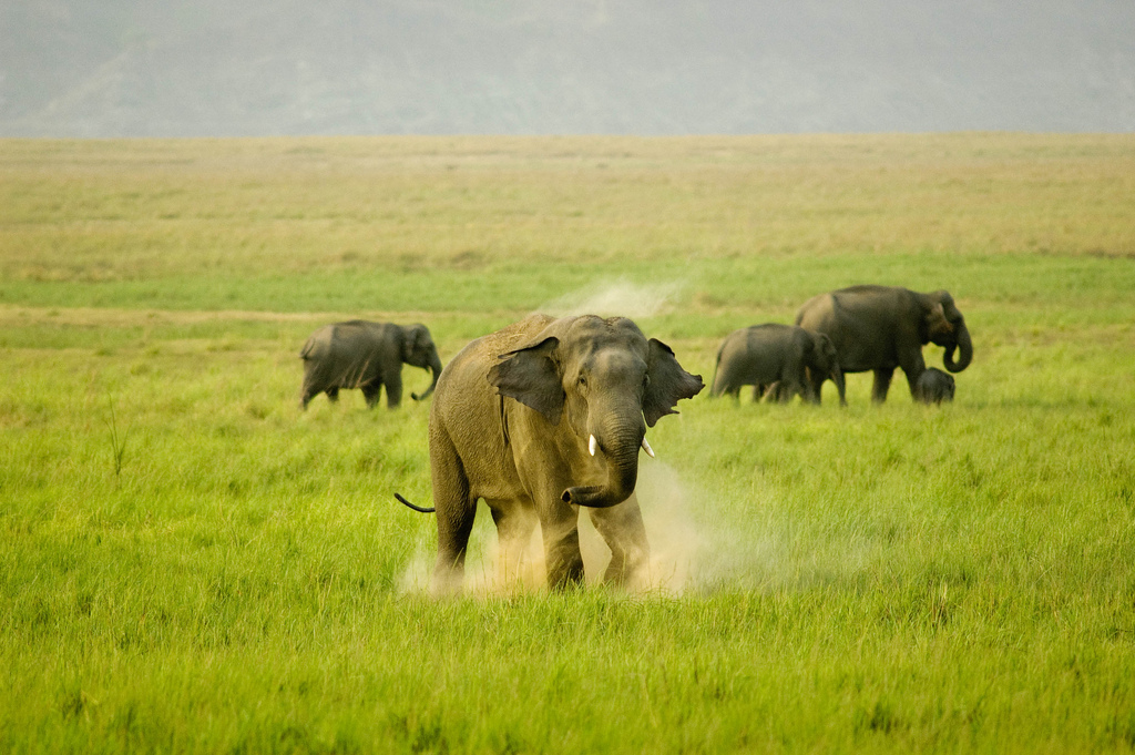 Jim Corbett package